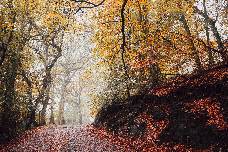 Aufnahme eines Herbstwaldes.