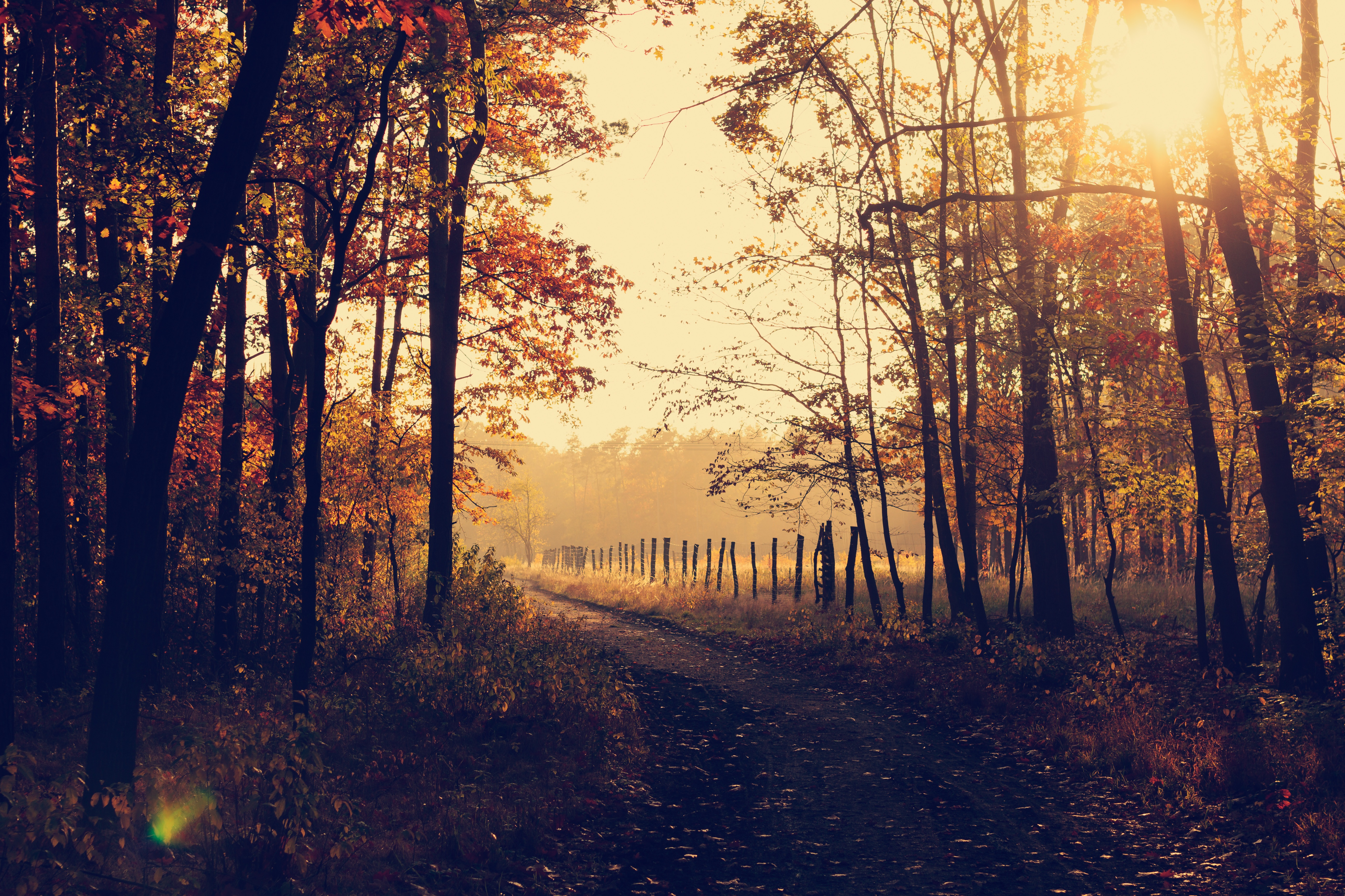 Ein herbstlicher Wald, der von Licht durchflutet wird.