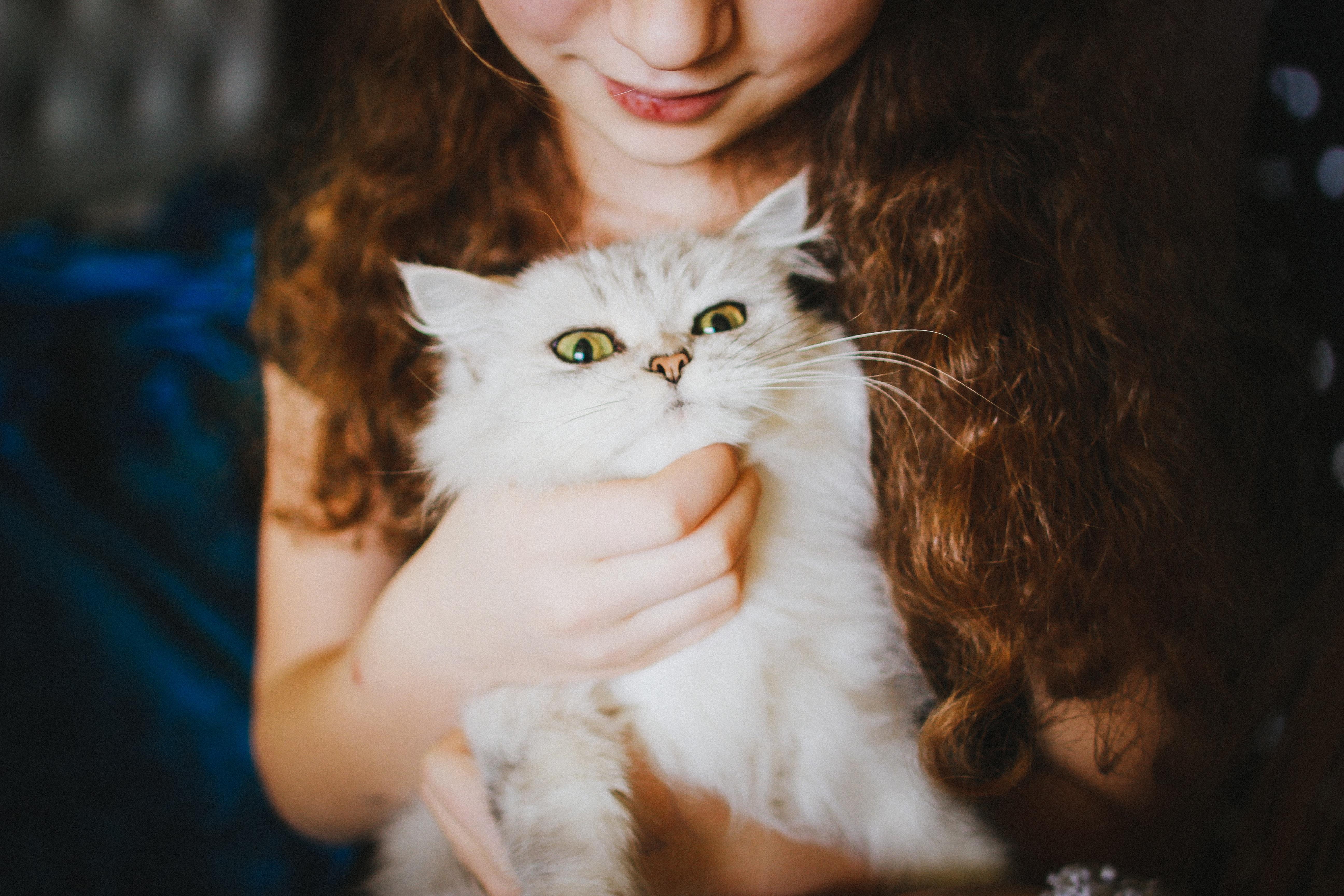 Katze, die von einem Mädchen auf dem Arm gehalten und gekrault wird