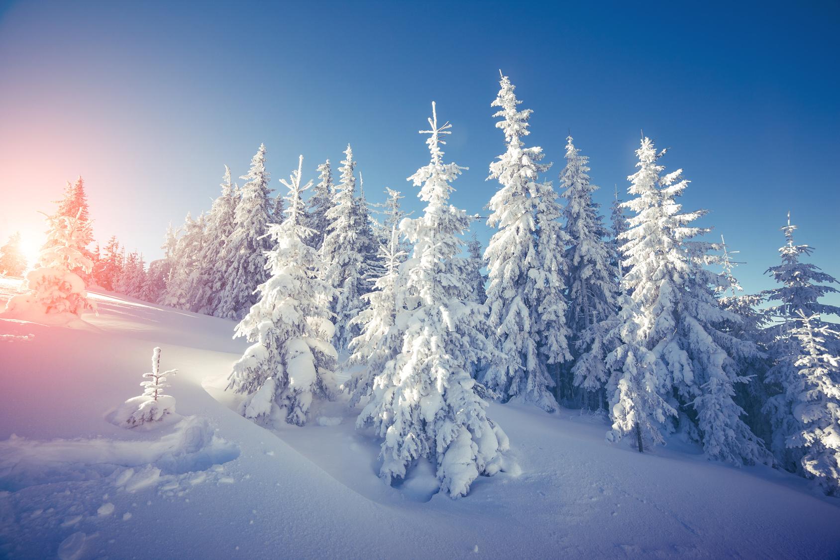 Schneebedeckte Nadelbäume vor blauem Himmel und rotleuchtender, aufgehender Sonne.