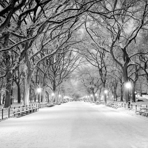 Verschneite Parklandschaft mit breitem Weg im Zentrum und kahlen, schneebedeckten Bäumen zu beiden Seiten.