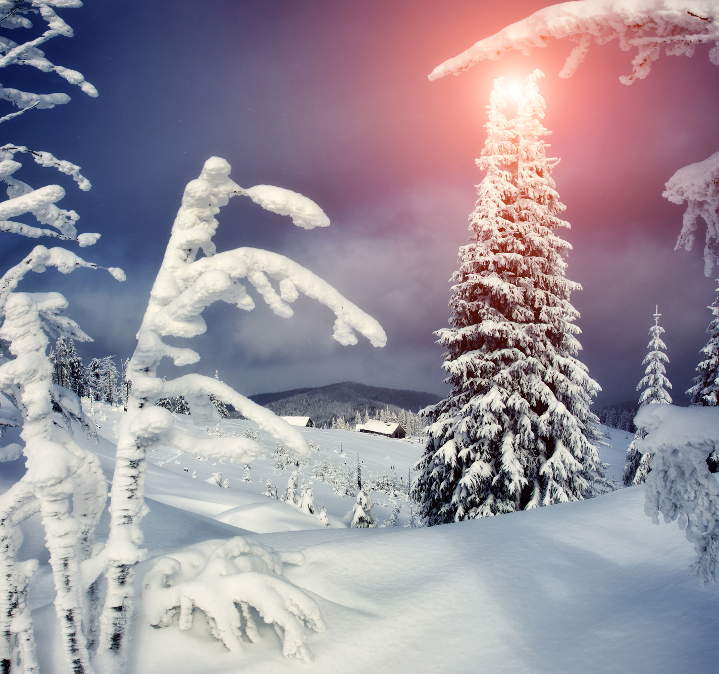 Tief verschneite, hügelige Winterlandschaft mit Zweigen im Vordergrund und einem markanten Nadelbaum im Hintergrund, unter roter Abendsonne.