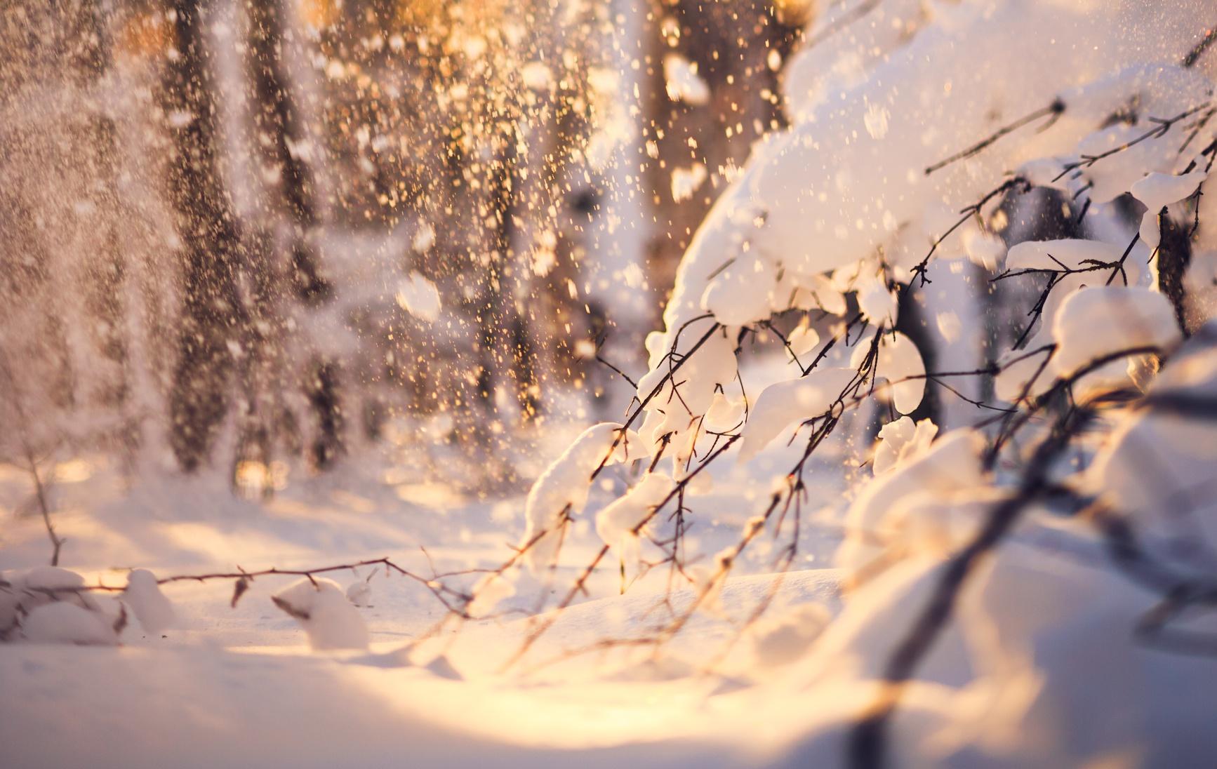 Sonnenstrahlen leuchten durch verschneite Bäume hindurch.