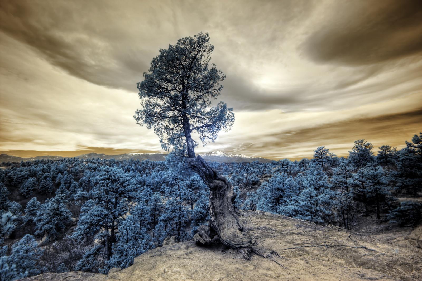 Dramatische Wolken in Gold und Silber über bläulich-surrealem Wald. Ein einsamer Baum im Vordergrund.
